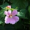 夏の名残の花々