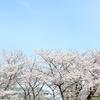 猿江恩賜公園の桜の下で、不思議なお弁当を食べたよ / お花見ピクニック日記