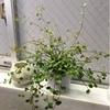 観葉植物と夏の花