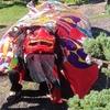 秋祭り奉納獅子舞。
