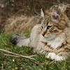 【換毛期】飼い主を悩ませる猫の抜け毛の対処