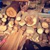 【出】2/24㊏ 休日、伐採木譲渡会、煙突掃除、掃除洗濯、練習少々。
