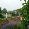 松大薬草園一般開放