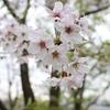 桜の名所!!神奈川県・弘法山を登ってみた