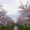 2-8   桜咲くトンネル