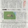 西日本新聞連載第4話 虫食いだらけの野菜に悩んでいたころ
