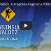 野生動物の楽園 アルゼンチン・バルデス半島