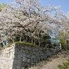 【厳選3つ】宮崎子どもと楽しむ程よい距離観光!神社パワースポット