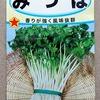 ミツバの水耕栽培に挑戦しています。今回は再生栽培ではなく、種から育ててみましょう