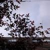 作曲工房 朝の天気 2017-12-24(日)クリスマス・イヴ くもり