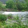 西湖放水路-河口湖バス釣りポイント