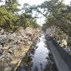 桜夙川に行ってきました!