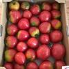 産直トマト