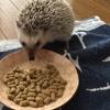 5  ハリネズミのご飯