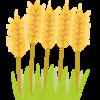 グルテンフリーが気づかせた小麦依存とダイエット観