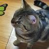 猫の鼻腔内リンパ腫㉜   ご祈祷を受けに