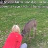 動物は恩を忘れない。野生に帰ったシカが僕たちに感動の奇跡を教えてくれた