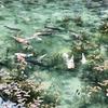 モネの池&フラワーパーク板取