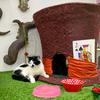 【イギリスの猫カフェ】Lady Dinah's Cat Emporium ロンドン