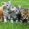 保健所の捨て猫と保護猫を飼いたい!引き取る条件と準備とは