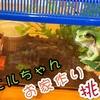 『カエルのお家作り♪』カエルの種類によって作り方が違うことに驚き!