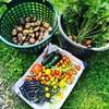 夏の収穫 in 北ドイツ〜新鮮野菜はオーブン料理で😋〜ミシュランガイドおすすめのレストラン in Plön