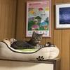 昨夜の地震とプーチンさん ~猫も災害時の経験に学ぶのかもしれない~