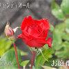 元気なクリスチャンディオール その差歴然!去年の写真と雲泥の差 2011/05/25