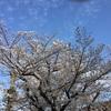 春は霞の、
