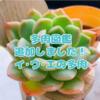 たにログ104 多肉図鑑【い・う・え】を更新しました!