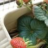 ◆採れたて野菜イロイロ