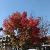 色づく京都の季節から
