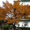 〈里の秋、紅葉見納め その1〉