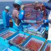 個別漁獲割当制度(IQ)を導入した佐渡のエビカゴ漁にいってきた