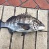 2016釣り納め釣行in泉大津