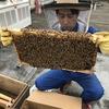 うちの蜂たちも来た~!