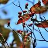 季節の花(神無月)