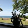 越前海岸にあるヴィーガンカフェ「Earth」と「越廼海水浴場」で日頃の疲れを癒してきた。