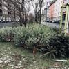 クリスマスツリーは年が明けたらポイ!