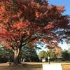 鳥羽山城(静岡県浜松市)-別城一郭の居館 晩秋の姿