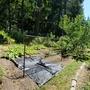 畑を宿根草野菜にシフトする