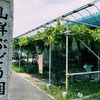 愛知県大府市の山洋ぶどう園のぶどうが美味しくてムシャムシャ食べてる