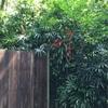 シンガポール動物園‼️ついに来たー!