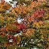 秋の色はユックリと・・・♪