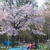 35a 円山公園