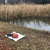 釣り池なう。。(๑╹ω╹๑ )