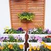 建設中👷駅前アパホテルと、PRONTOの様子と、かわいい花壇🌸✨✨