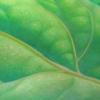 路傍の植物を自給自足的生活を身に付けるご自身からの眼差しを素粒子化して書き上げている絵をご覧ください。[とおるちゃんブログ]