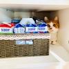 棚に侵入したい愛猫 vs ペットボトルを収納したい飼い主