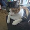 【愛猫日記】毎日アンヌさん#283